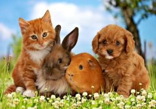 cats-little-friends-friend-dog-sweet-cute-animal-bunny-orange-guinea-pig-puppy-green-kitten-rabbit-pet-tree-flower-cat-ginger-blue-catel-pisica-free-desktop-wallpaper